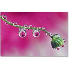 Trademark Fine Art Pink Eye Canvas Art by Steve Wall, Size: 30 x 47, Multicolor