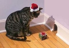 come on out, little buddy..Santa brought you a present...
