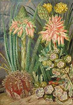 Some Grotesque Plants from the Karroo, South Africa Marianne North - circa 1882 Botanical Drawings, Botanical Art, Botanical Illustration, Beautiful Paintings Of Flowers, Marianne North, Kew Gardens, Art Uk, Art Images, Amazing Art