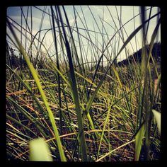 Grass beach... check the rest of my pictures out at   http://instacanv.as/ashton_elise