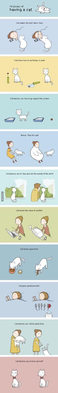 10 beneficios de tener un gato - Benefits of owning a cat :)
