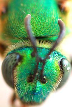 GetawayMoments: Green Bee Macro Deconstruction