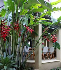 Exotic Tropical Heliconia Plants : Outdoor Patio Garden With Heliconia Plants Heliconia plants make bold statements in gardens. Heliconia is a genus of tropical flowering plants that are notable for the colored bracts. Tropical Garden Design, Tropical Backyard, Backyard Pool Landscaping, Tropical Landscaping, Garden Landscape Design, Front Yard Landscaping, Tropical Plants, Tropical Gardens, Exotic Plants
