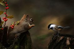 Fotograf Salutation d& von Andre Villeneuve auf Chipmunks, Nature Animals, Animal Photography, Make Me Smile, Animal Pictures, Beautiful Pictures, Photos, Creatures, Birds