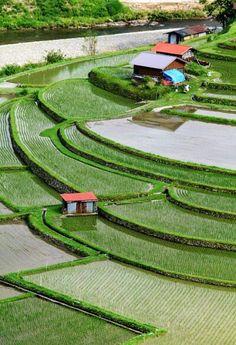 Aragijima Terraced Rice Fields, Wakayama, Japan|あらぎ島 I lovethe field shapes Asia Travel, Japan Travel, Beautiful Places, Beautiful Pictures, Wakayama, Art Japonais, We Are The World, Japanese Culture, Amazing Nature