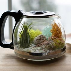 Learn how to make this air plant coffee pot terrarium. It's easy and easy to maintain!