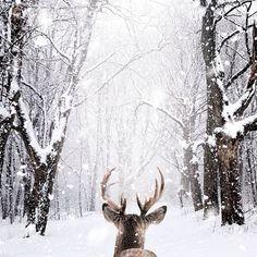 Animals 582301426789963932 - Canada paysage fond ecran neige fond d écran d hiver Source by celinepupat Winter Szenen, I Love Winter, Winter Magic, Winter Christmas, Merry Christmas, Rustic Christmas, Winter White, Christmas Time, Christmas Snowflakes