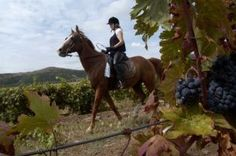 Alcovin - Tour on horses Wine Recipes, Tourism, Horses, Animals, Food, Turismo, Animales, Animaux, Eten