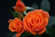 i like the orange roses :)
