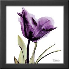 Art.com Royal Purple Parrot Tulip Framed Print Wall Art ($90) ❤ liked on Polyvore featuring home, home decor, wall art, flowers, photography wall art, flower stem, flower home decor and flower wall art
