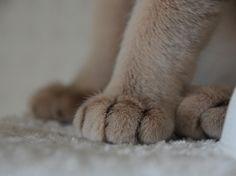 hand_cat13