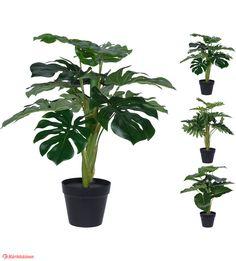 T Java, Plants, Flora, Plant, Planting