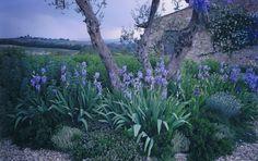 irises.jpg (1600×1006)