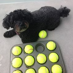 Dog games are a great way to keep your pet stimulated and to practice using their senses. Only takes a minute to set up and costs almost nothing.