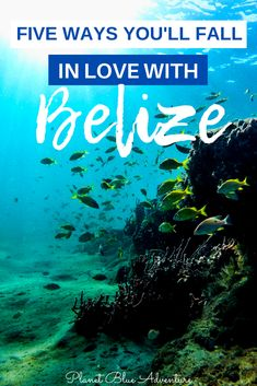 Belize has the second largest barrier reef, a tropical rainforest that's home to hundreds of species, ancient Maya ruins, miles of white sand beaches. Belize Travel, Mexico Travel, Honduras, Canada Travel, Travel Usa, Cool Places To Visit, Places To Travel, Costa Rica, Amazing Destinations