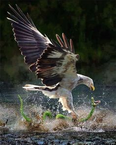 """by Miu Anthony Kwok ~ Miks' Pics """"Fowl Feathered Friends V"""" board @ http://www.pinterest.com/msmgish/fowl-feathered-friends-v/"""