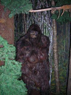 Clearest photo of female Sasquatch to date.