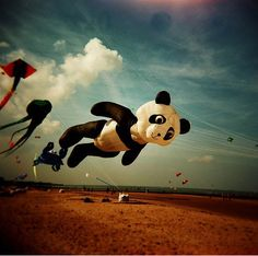 all of my favorite foods come in a panda version! Don't forget to check out all of the cute panda stuff in our store! Panda Love, Cute Panda, Panda Panda, Panda Bears, Street Photography, Art Photography, Photography Camera, Go Fly A Kite, Pandas