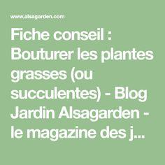 Fiche conseil : Bouturer les plantes grasses (ou succulentes) - Blog Jardin Alsagarden - le magazine des jardiniers curieux