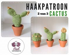 Haakpatroon cactus 2
