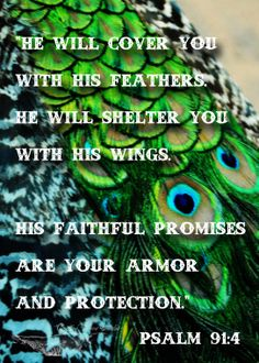 Psalm 91:4. He will cover you...He will shelter you