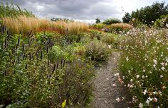 Piet Oudolf landscape design, Wisley. Note the layering.