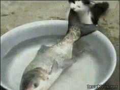 The perfect Fis CatFish Fish Animated GIF for your conversation. Discover and Share the best GIFs on Tenor. Catfish Fishing, Carp Fishing, Fishing Boats, Fishing Store, Fishing Life, Fish Gif, Cat Gif, Funny Animals, Cats