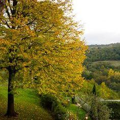 Casale Di Fiesole | Tuscany