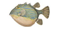 Fish 2 by DemetraDeane on DeviantArt