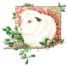 Portfolio - Kelly Archer Wildlife & Pet Portraits  #guineapig #albino #mistletoe #christmas #painting #watercolor #watercolour #stilllife #portraits #petportraits