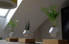 Le piante sospese di Simon Morris · ObjectsMag · Rivista di cultura contemporanea
