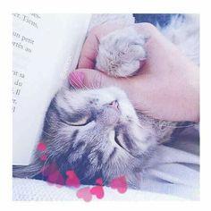 ❁ Follow Pinterest : axietysp I Love Cats, Crazy Cats, Cute Cats, Kittens Cutest, Cats And Kittens, Animals And Pets, Cute Animals, Cat Icon, Kawaii Cat