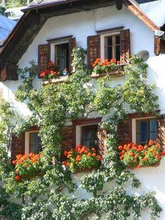Window boxes in Hallstatt Austria by adrienne_bartl, via Flickr