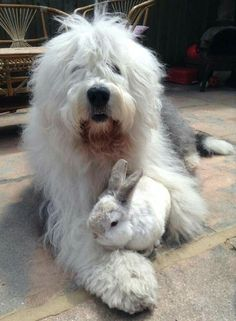 An OES WITH a Bunny...!?  Oh happy DAY!!! -jdw