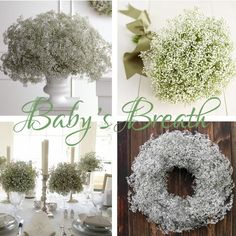 Baby's Breath Centerpieces and bouquets :  wedding babys breath bouquet boutonniere center centerpieces flowers help pieces BabysBreath