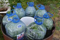 Парник для огурцов их пластиковых бутылок