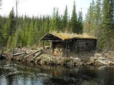 Resultado de imagem para rural forest