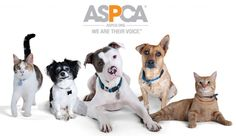 Fortunately we have the ASPCA to help stop and bring awareness of animal cruelty to people across the globe. This organization puts on commercials and also sets up fundraisers to support victims  of animal abuse. The organization also accepts donations to support the surgeries the rescues might need and the donations also pay for feeding the animals back to a full recovery for the hope of one day to be adopted by a great new family
