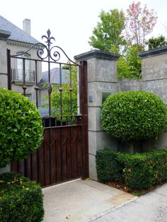 Here the evergreen topiary makes a striking statement either side of entrance gate.