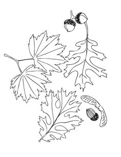 thanksgiving and fall coloring pages - Kids Coloring Activities