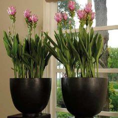 Indoor plants: impressive planters.....2