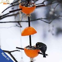 AistBox: 40 идей зимы: апельсиновая кормушка для птиц  Предлагаем вам с малышами смастерить яркую кормушку для птичек! Она будет очень полезна пернатым и украсит ваш двор, а сделать такую кормушку совсем не сложно.