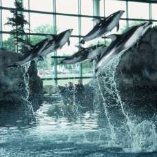 Shedd Aquarium - not only an included attraction on the Go Chicago Card - but even better, let's you SKIP the line!