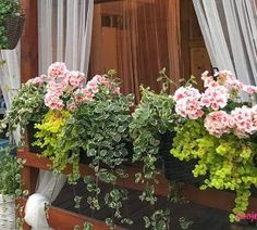 Easy Garden, Herbs, Geranium, Amazing, Flowers, Plants, Gardening, Home Decor, Life