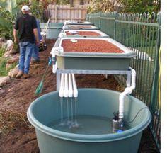 Aquaponics backyard design