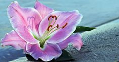 Free Image on Pixabay - Lily, Flower, Blossom, Bloom, Water Blossom Flower, Holiday Fashion, Bubbles, Bloom, Lily, Framed Prints, Plants, Instagram, Sand Beach