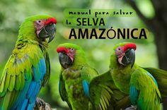 Por qué deberíamos TODOS salvar la Selva Amazónica