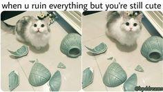 meow_irl: MEOW_IRL - Cats - the greatest joy in life - Katzen Cute Animal Memes, Animal Jokes, Cute Funny Animals, Funny Animal Pictures, Cute Baby Animals, Funny Cute, Animals And Pets, Cute Cats, Hilarious