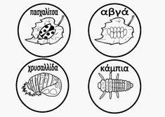 Ελένη Μαμανού: Κύκλος ζωής των εντόμων