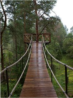 oooowww...let's build a swinging bridge across our pond to lead to a tree house or a small deck to jump off for a zip line :)